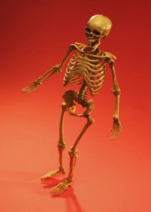 Healthy Bones - Osteoporosis and Exercise